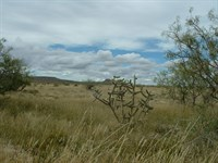 Great Hunting-120 Acs Only $688/Mo : Sierra Blanca : Hudspeth County : Texas