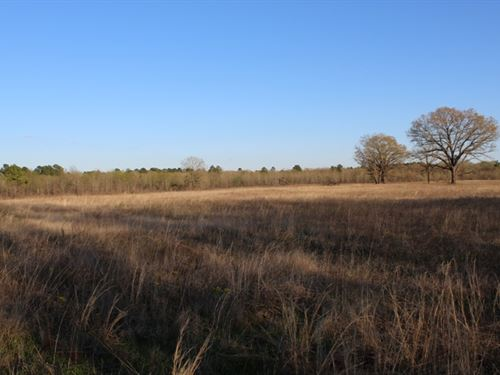 Great Home Site On 28+ Acres : De Kalb : Bowie County : Texas
