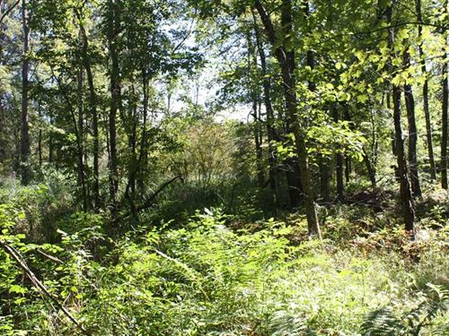 40 Rolling Wooded Acres in Allegan : Pullman : Allegan County : Michigan