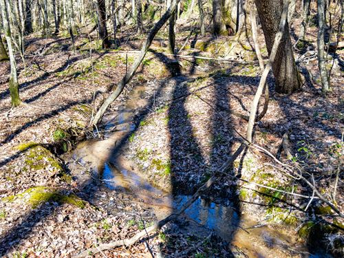 21 Ac Wooded Tract Near Green Creek : Columbus : Polk County : North Carolina