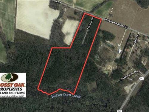 39 Acres of Timber And Hunting Lan : Roseboro : Cumberland County : North Carolina