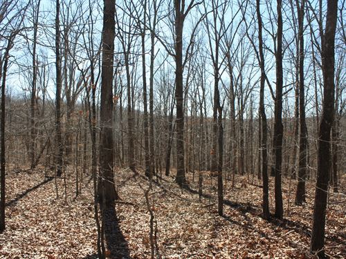 Wappapello MO Land 12 Acres : Wappapello : Wayne County : Missouri