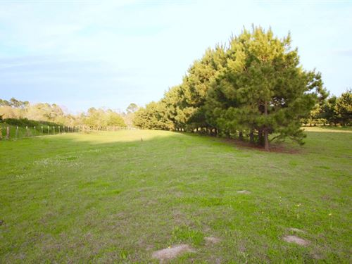 Land East Texas, Wood County : Winnsboro : Wood County : Texas