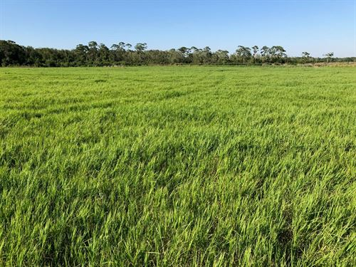 555+/- Lush Acres In Okeechobee Fl : Okeechobee : Florida