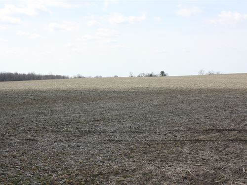 Land Auction In Indiana : Freelandville : Knox County : Indiana