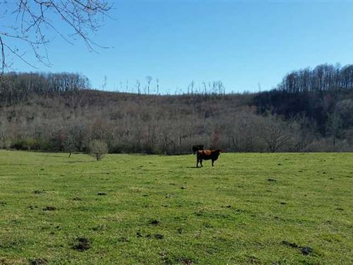 45 Acres in Moravian Falls, Alexan : Moravian Falls : Alexander County : North Carolina