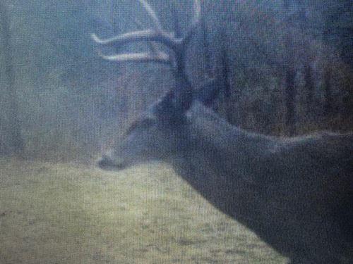 Red Bay Prime Hunting Land : Red Bay : Franklin County : Alabama