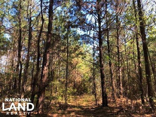 Nub Road 40 Acres : Gloster : Amite County : Mississippi