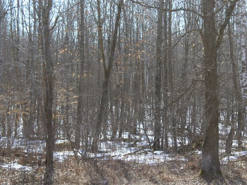 139 Acres Mille Lacs Cty River : Isle : Mille Lacs County : Minnesota