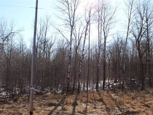 109 Acres Mille Lacs Cty River : Isle : Mille Lacs County : Minnesota