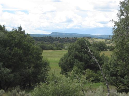 Northern NM Mountain Pasture : Chama : Rio Arriba County : New Mexico