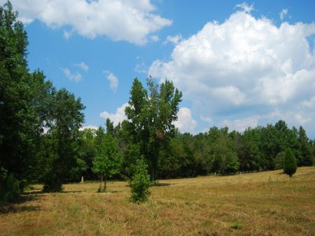 18.3 Acres Estate Site : Pauline : Spartanburg County : South Carolina