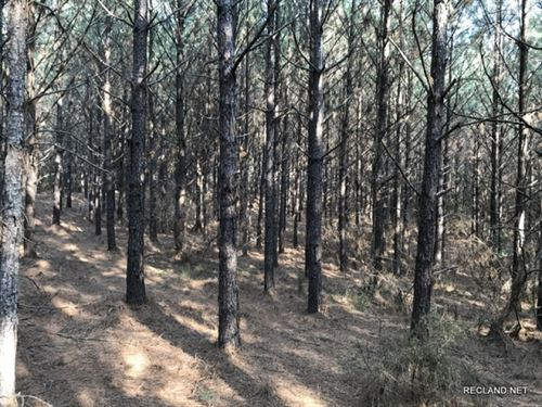 31 Ac, Pine Plantation With Minera : Spearsville : Union Parish : Louisiana