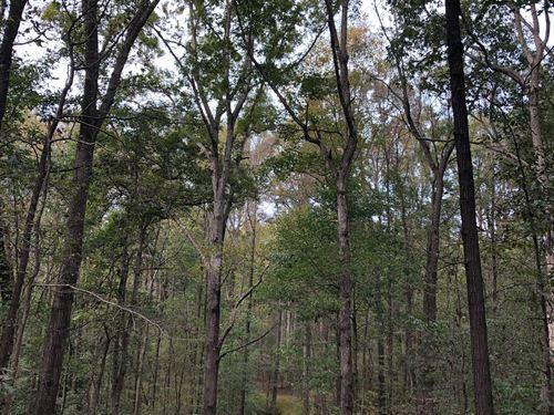 Carnesville Wilderness : Carnesville : Franklin County : Georgia