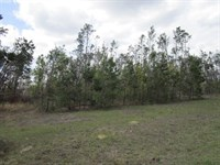 10 Acre Tract Gated Subdivision : Bristol : Liberty County : Florida