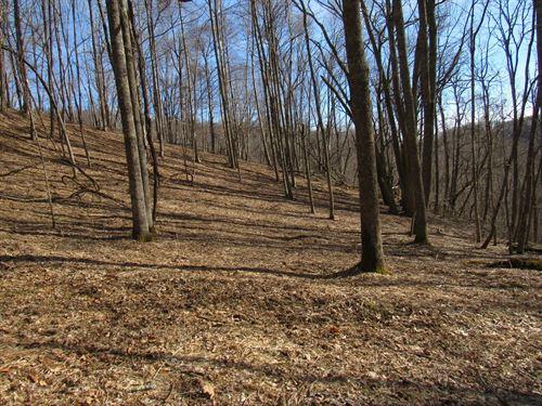 Wonderful Hunting Property : Sparta : Alleghany County : North Carolina