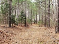 228Ac Squeeze Bottom, Hills, Mixed : Buffalo : Humphreys County : Tennessee