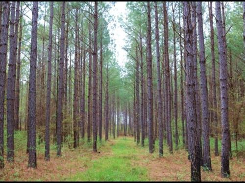 155.62 Acres In Attala County In Sa : Sallis : Attala County : Mississippi
