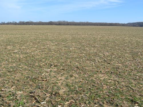 White River Bottoms Farm For Sale : Rosie : Independence County : Arkansas