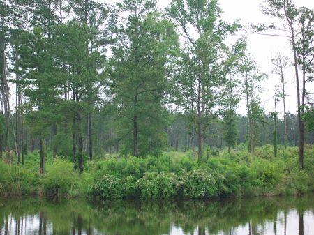 Estate Homesite On Private Lake : Hawkinsville : Pulaski County : Georgia
