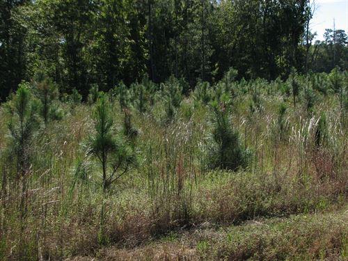 Blue Ridge Timberlands : Dillwyn : Buckingham County : Virginia