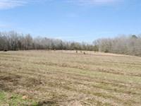 Hightower Tract : Barnwell : Barnwell County : South Carolina