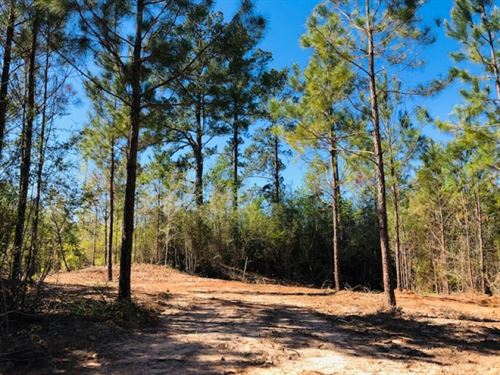 108 Acres / Tylertown / MS : Tylertown : Walthall County : Mississippi