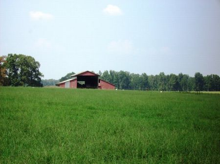 680  Acre Home Site Price Reduced : Butlerville : Lonoke County : Arkansas