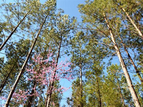 Musket Hill Tract : Sharon : York County : South Carolina
