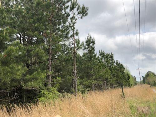 9 Wooded Acres : Prentiss : Jefferson Davis County : Mississippi