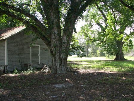 18+/- Acres With Pecan Orchard : Statesboro : Bulloch County : Georgia