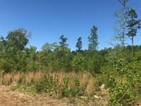 Oliver Bridge Road Tract B : Watkinsville : Oconee County : Georgia
