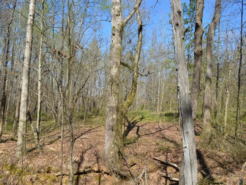 23+/- Acres Near Boiling Springs : Inman : Spartanburg County : South Carolina