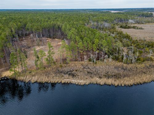 Acreage Overlooking The Neuse River : New Bern : Pamlico County : North Carolina