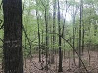 Rolling Hills Of Cherrybark Oak : Fayette : Jefferson County : Mississippi