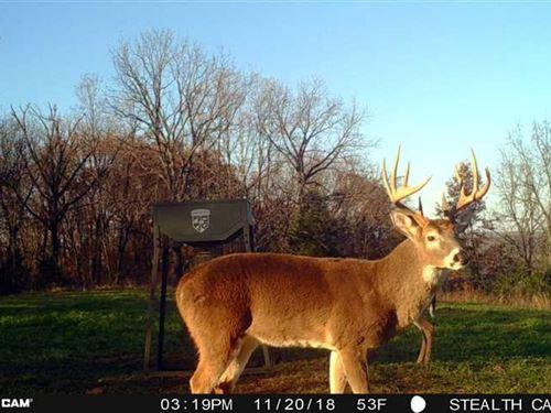 40 Acres in Elkins, AR : Elkins : Washington County : Arkansas