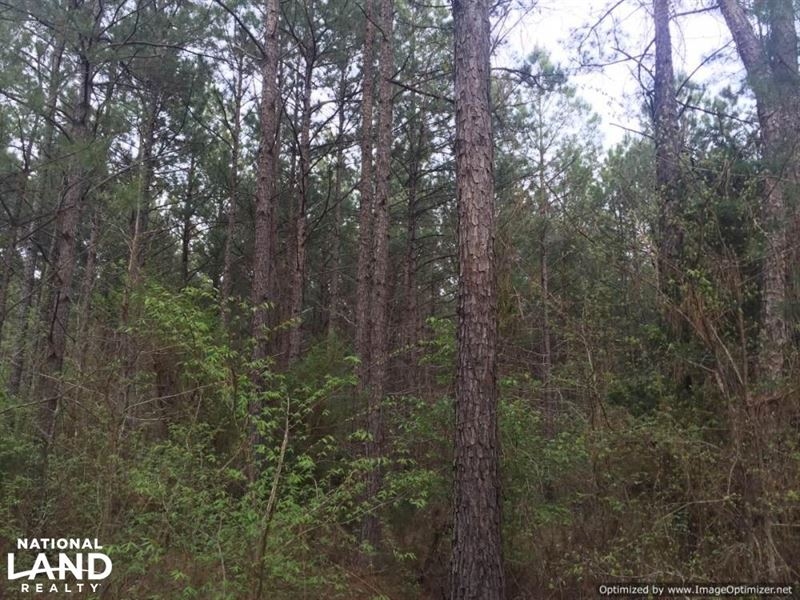 Duck Hill Ms >> Duck Hill Timber Investment Farm For Sale Duck Hill Montgomery County Mississippi