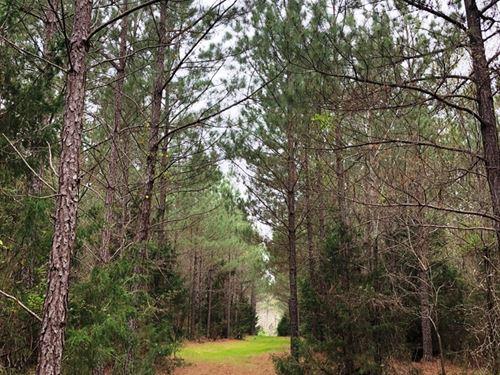 Princeton Tract : Princeton : Laurens County : South Carolina