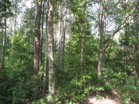 Vineland 80 : Pine Hill : Marengo County : Alabama