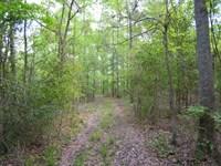 92.9+- Acres Wooded, Creek : Hephzibah : Richmond County : Georgia