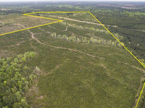 274 Acres Duff Road : Livingston : Polk County : Texas