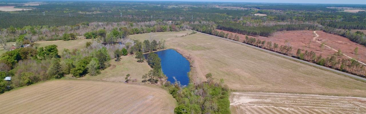 Georgia Pine Tree Farms for Sale : FARMFLIP