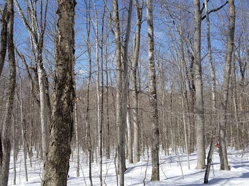Wilton Farmer Road : Wilton : Franklin County : Maine