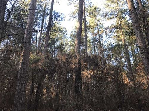 80 Acre Investment Grade Timbe : Carthage : Leake County : Mississippi