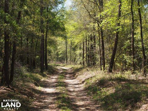 Northwest Florida Hunting Land And : Westville : Walton County : Florida