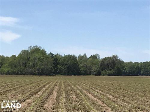24 Acres Unirrigated Farmland : Pioneer : West Carroll Parish : Louisiana