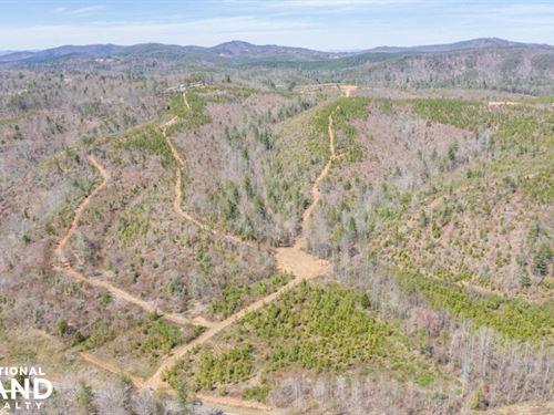 River Road Hunting And Timber Tract : Morganton : Burke County : North Carolina