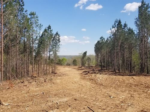 Vacant Hunting Land Perry County TN : Linden : Perry County : Tennessee