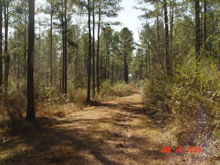 160 Acres : Beatrice : Monroe County : Alabama