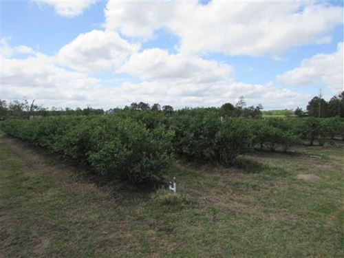 Blueberry And Row Cropland in Baco : Alma : Bacon County : Georgia